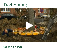 Video Traeflytning 2